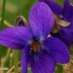 Zdjęcie profilowe Jolanta