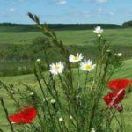Zdjęcie profilowe Beata L.