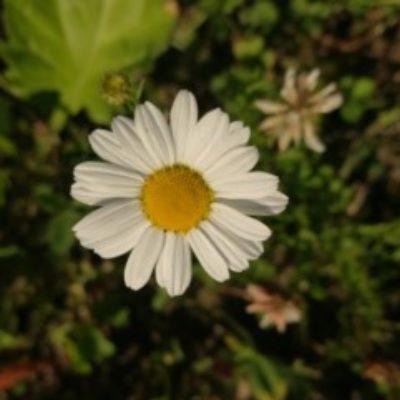 Zdjęcie profilowe Rororen